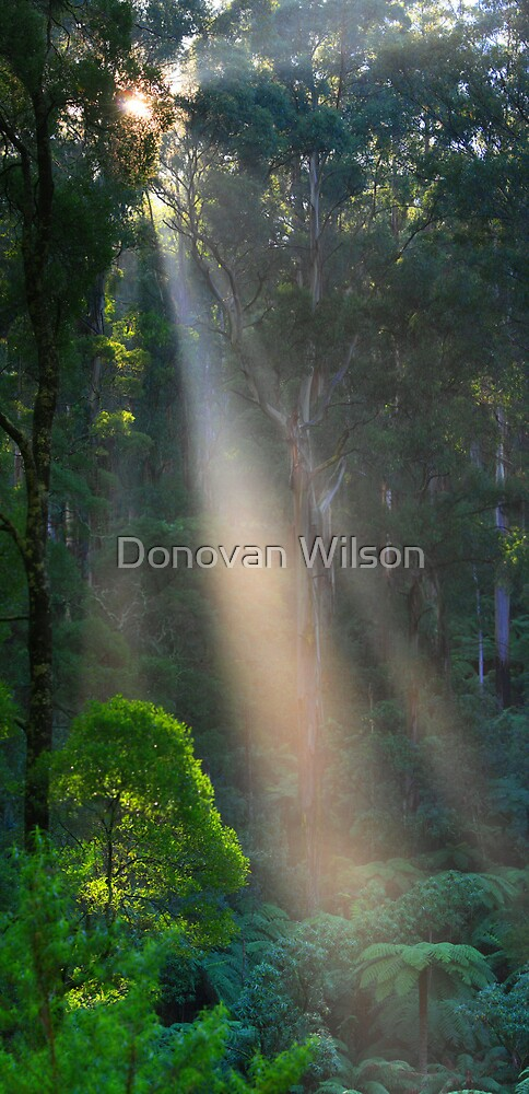 On the way to Mt Donna Buang. by Donovan Wilson
