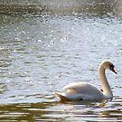 Swan Lake by Stephanie Hillson