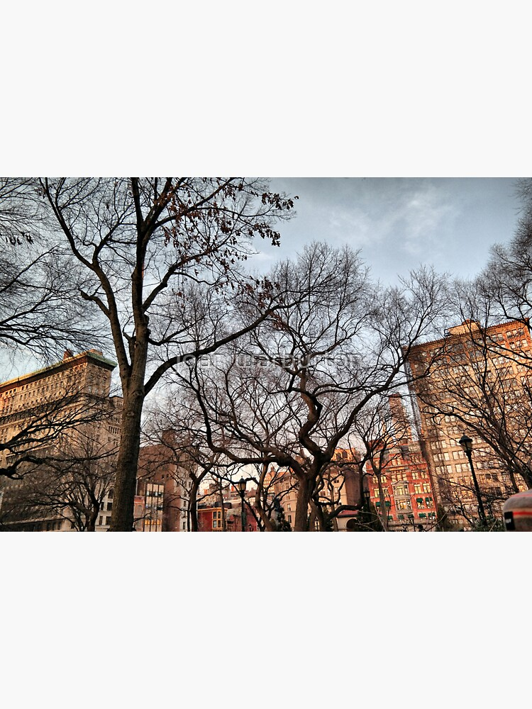 Behind The Trees From Union Square de jwarburton