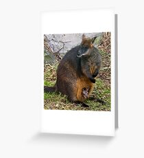 Peekaboo! Greeting Card