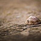 She sells sea shells... by Sarah Moore