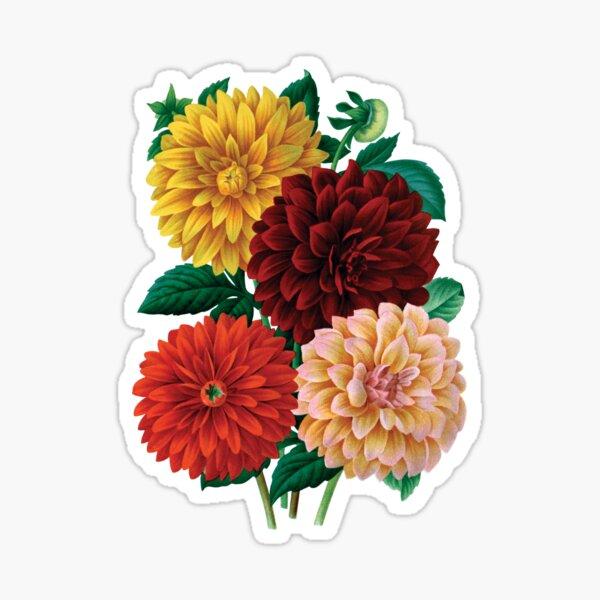 Vintage Dahlias Sticker
