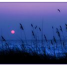 Sunset Grass Bird by Mal Bray
