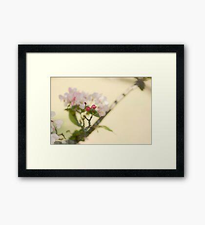 Ornamental Cherry Framed Print