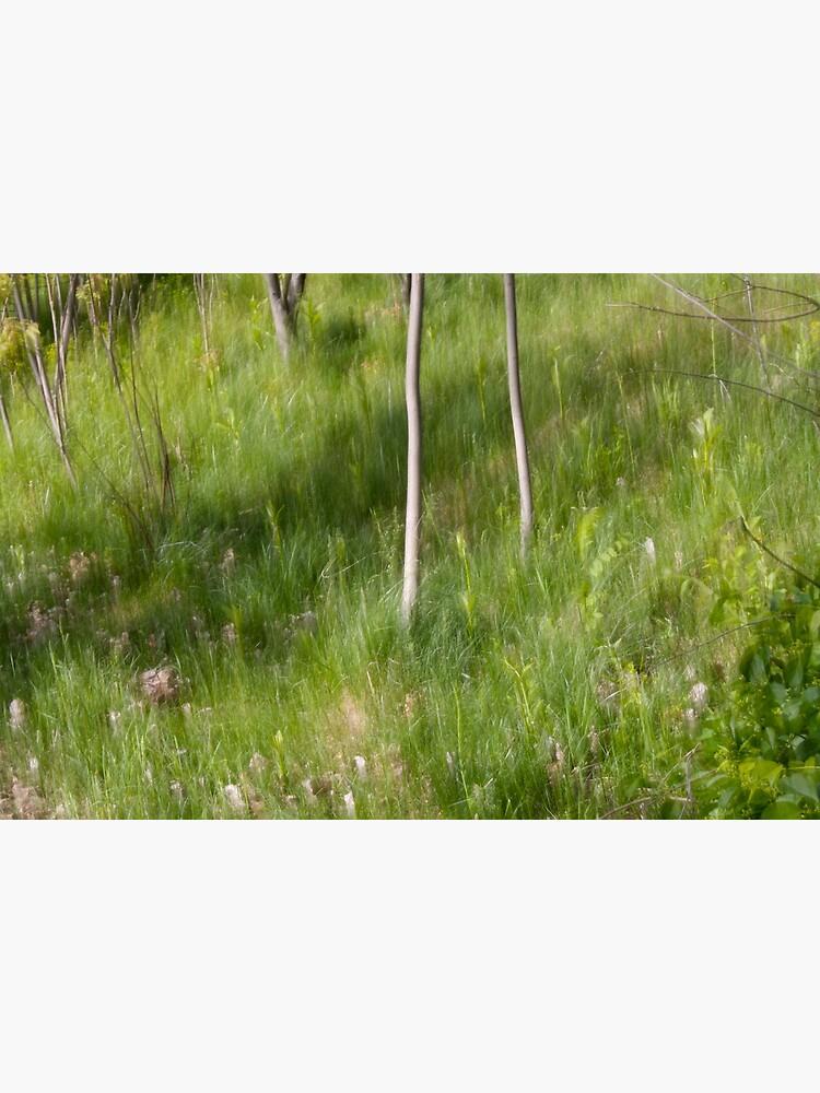 Saplings in Spring by LynnWiles