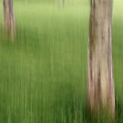 Trunks in the Grass by Lynn Wiles