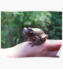 Grey Tree Frog Poster