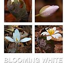Blooming White Calendar by Richard G Witham