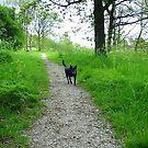 Morning Walk in May  by ienemien