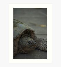 Snapping Turtle 2 Art Print