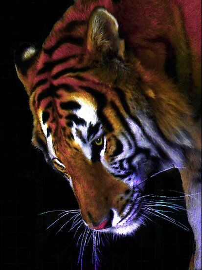 Grace of a Tiger by Dawn B Davies-McIninch