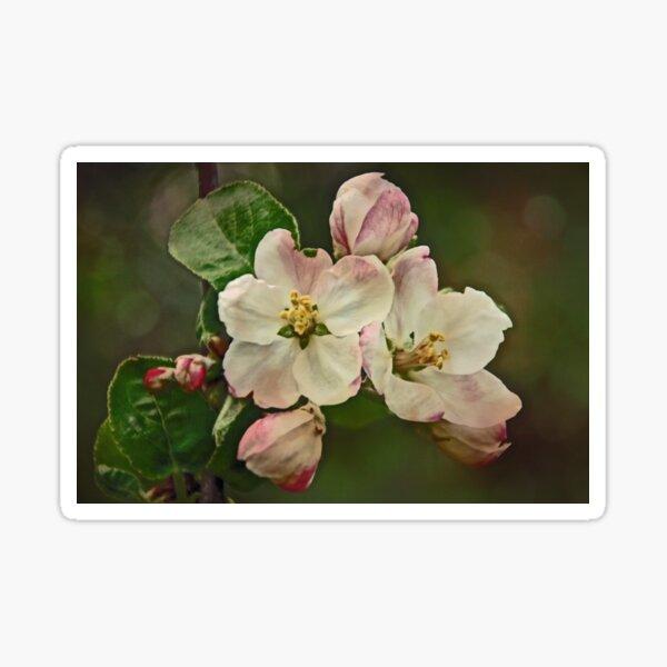 Apple Blossom Time #1 Sticker