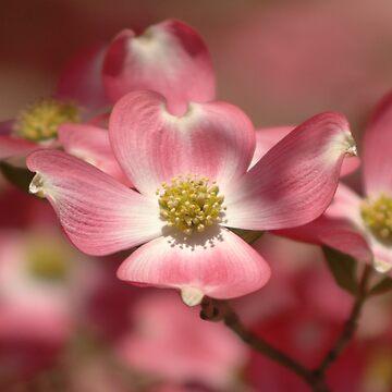 spring to blossom by alexrpk