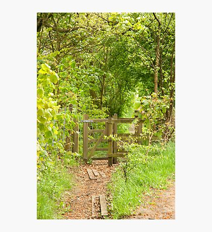 Country path in Spring Photographic Print