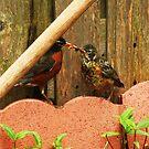 bird feed bird by nicolejhill
