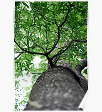 Squirrels Point of View Poster