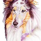 Collie - blue merle by doggyshop