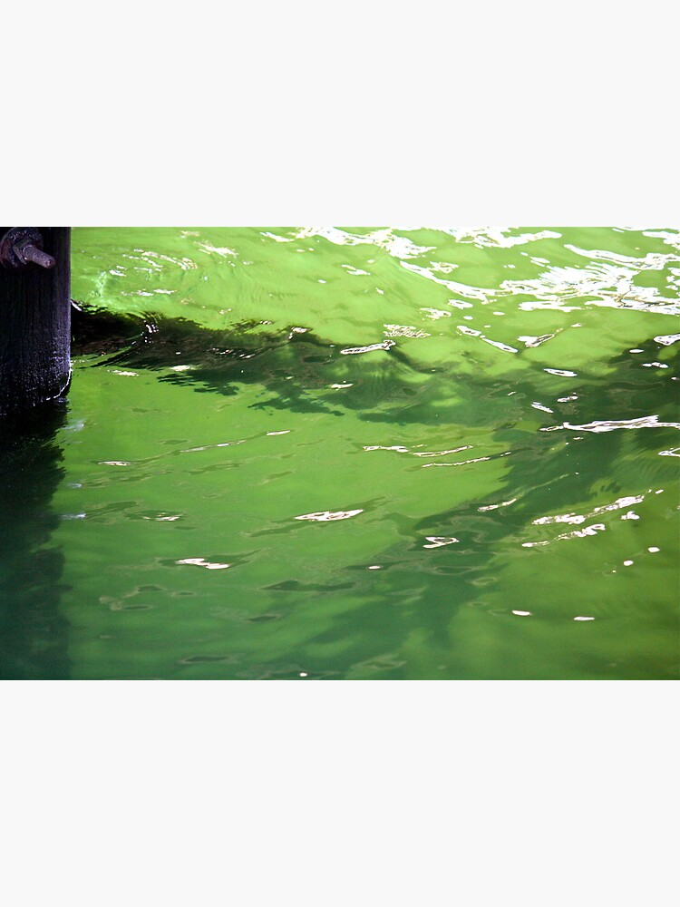 Growth under the Dock by LynnWiles