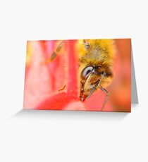 Bee on Grevillea Greeting Card