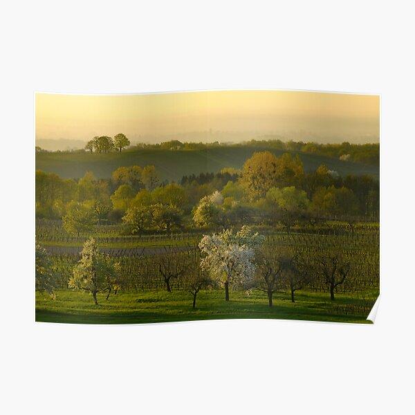 Alsace landscape in the spring Poster