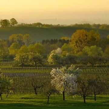 «Paysage d'Alsace au printemps» par Isenmann