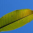 Translucent Leaf by PhoenixArt