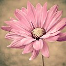 Pink Petals by Nikki Collier