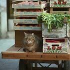 Der Gemüsehändler von Nerone