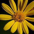 Yellow on black by loiteke