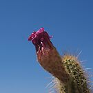 cactus bloom ending by Bonnie Pelton