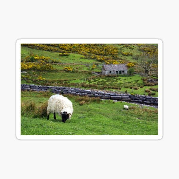 Stone Cottage Gorse and Sheep Sticker