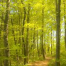 Spring Trail_1 by sundawg7