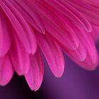 Wing Petals by Mia Rose