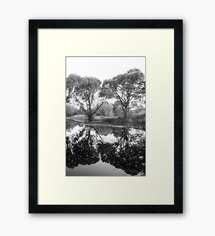Tree Vanity Framed Print