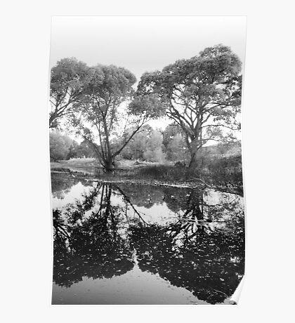 Tree Vanity Poster