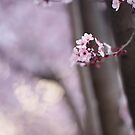 a single blooming tree branch in a sea of pink by aspenrock