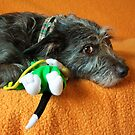 Pepper & New Toy by lisajns