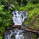 Cool Fresh Water - Oregon Cascades by Charles & Patricia   Harkins ~ Picture Oregon
