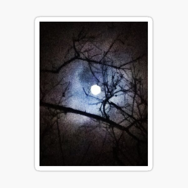 The Full Moon Between Branches Sticker