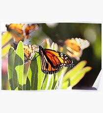 Butterfly lights Poster
