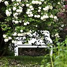 The Bench by Corkle