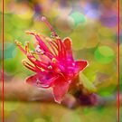 Tiny Peach Blossom by Eugenio