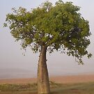 boab tree - town beach, broome by col hellmuth
