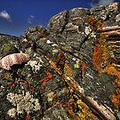 Shell on the rocks by Drodbar