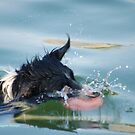 WHEN PETS LOVE WATER -THEY GO FOR WHAT-EVR IT TAKES! von Magriet Meintjes