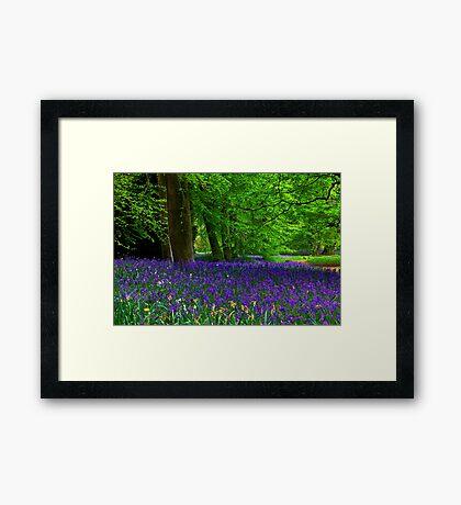 Bluebell Wood - Thorpe Perrow #1  (Spring) Framed Print