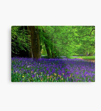 Bluebell Wood - Thorpe Perrow #1  (Spring) Metal Print