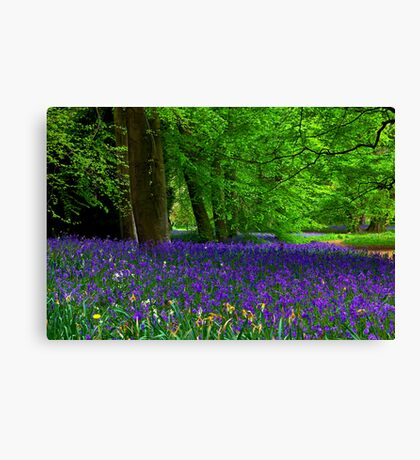 Bluebell Wood - Thorpe Perrow #1  (Spring) Canvas Print