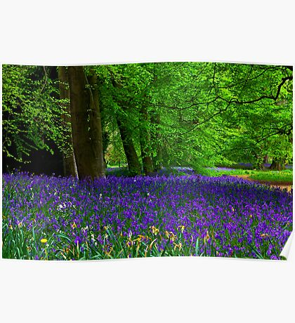 Bluebell Wood - Thorpe Perrow #1  (Spring) Poster