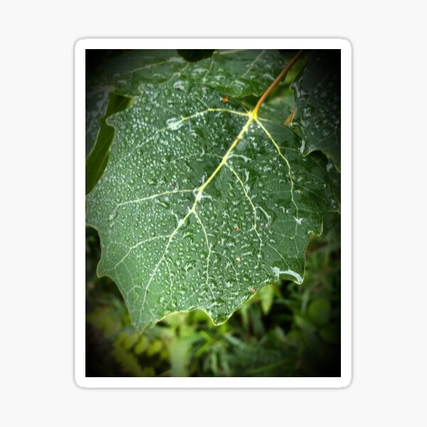 Dewy Leaf in Boothbay Sticker